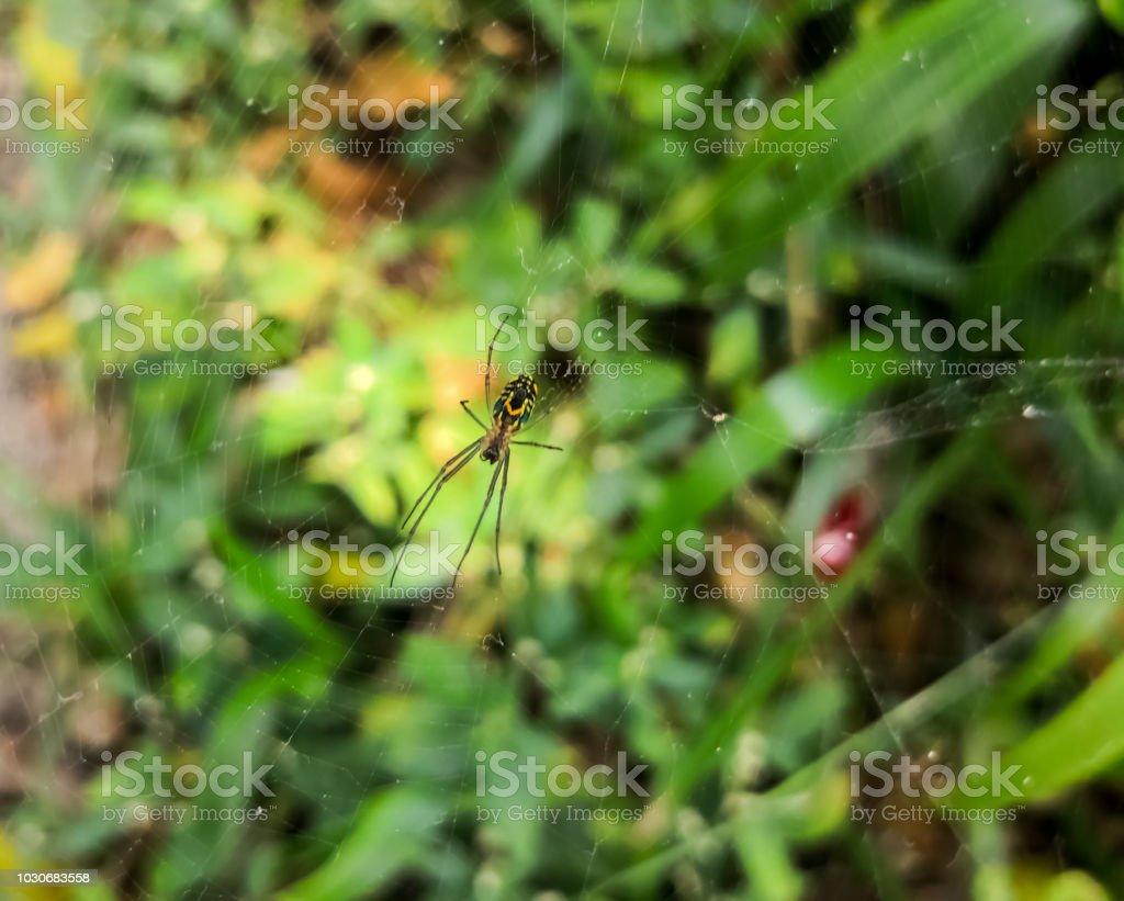 Aranha de Vespa, um aracnídeo exótica de Orb-weaver, sobre um fundo colorido deslumbrante - foto de acervo