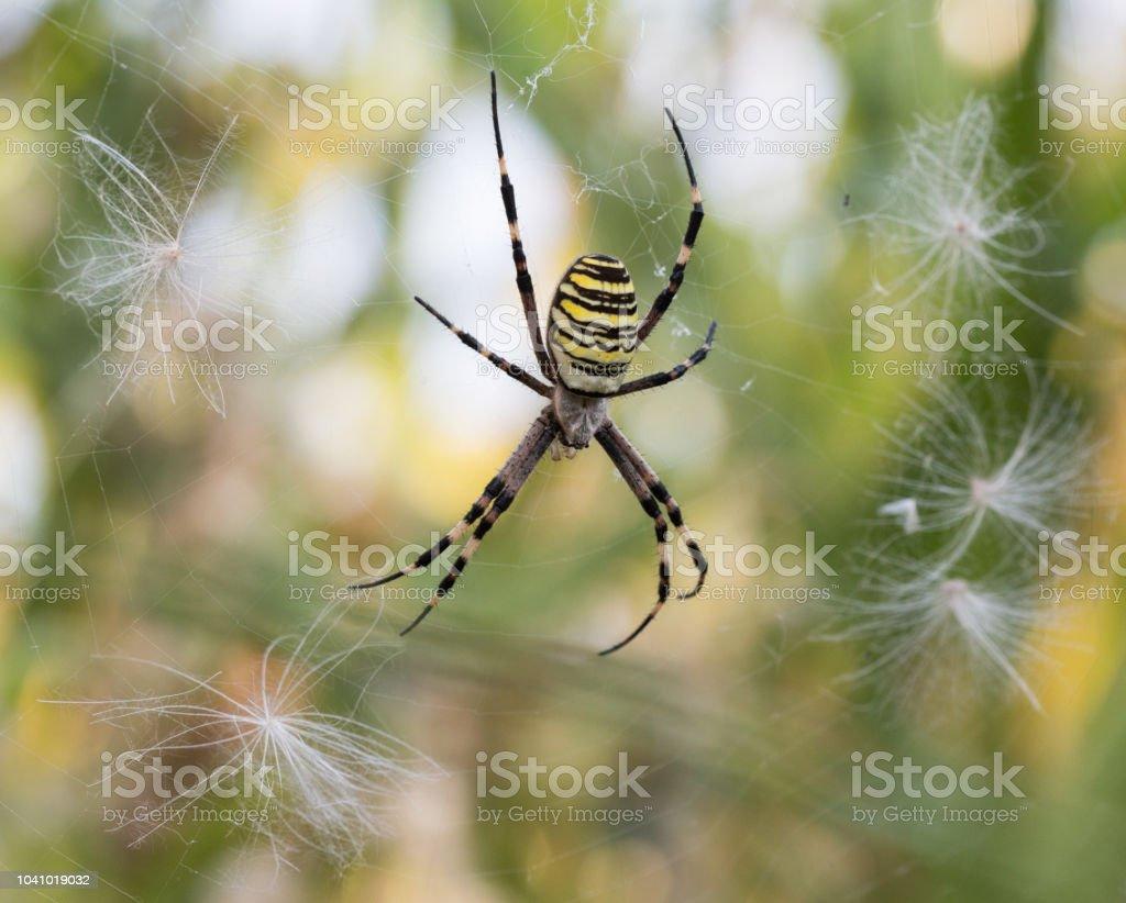 Aranha Assinatura - foto de acervo