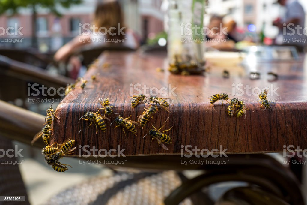 Wasps in a cafe stock photo