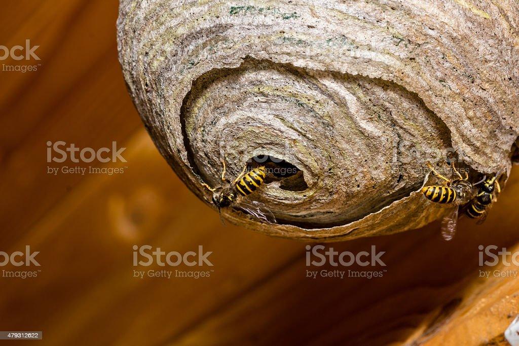 Wasps'nest - foto de stock