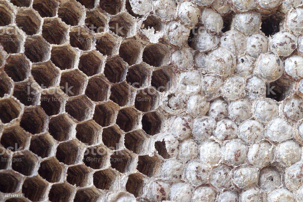 Wasps nest royalty-free stock photo