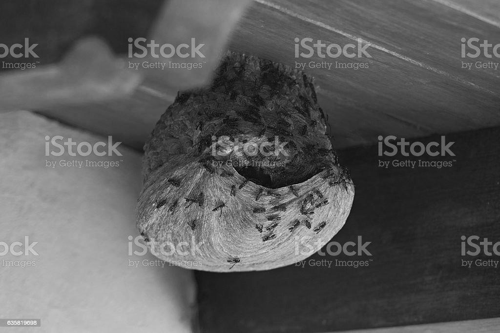 Wasps wild nest stock photo
