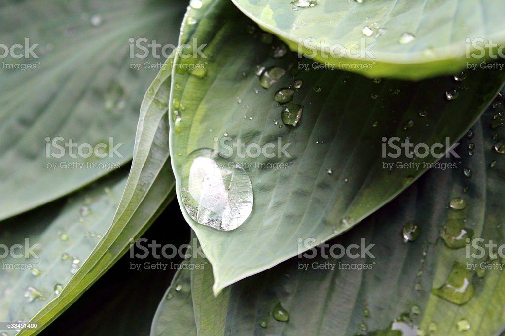 Wassertropfen stock photo