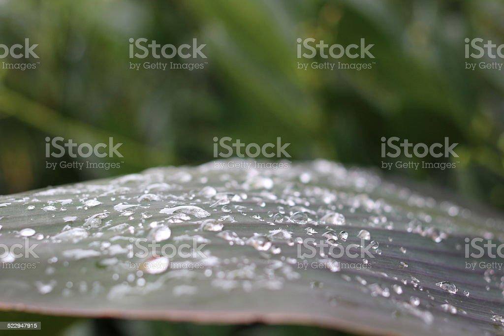 Wassertropfen - 2 – Foto
