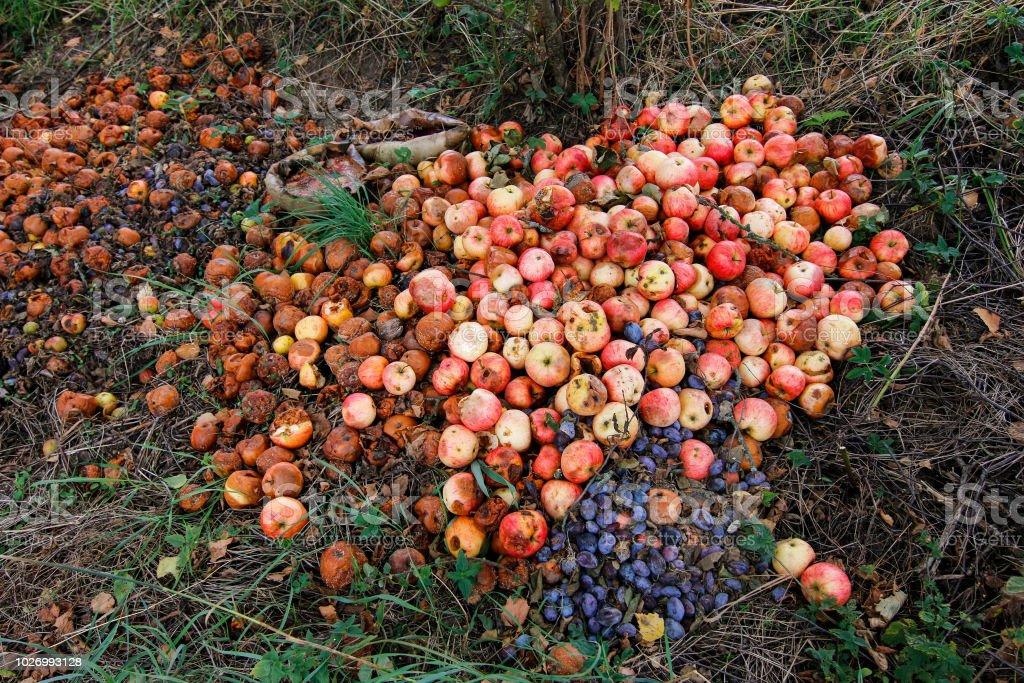 Waste from autumn harvest stock photo