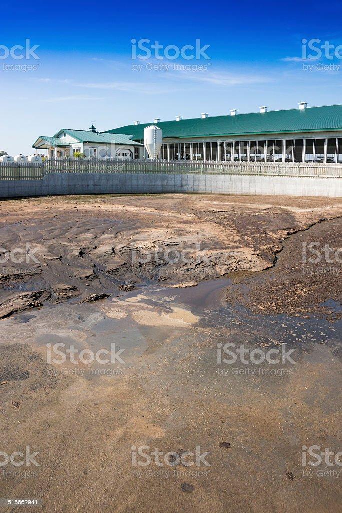 Waste lagoon on a diary farm stock photo