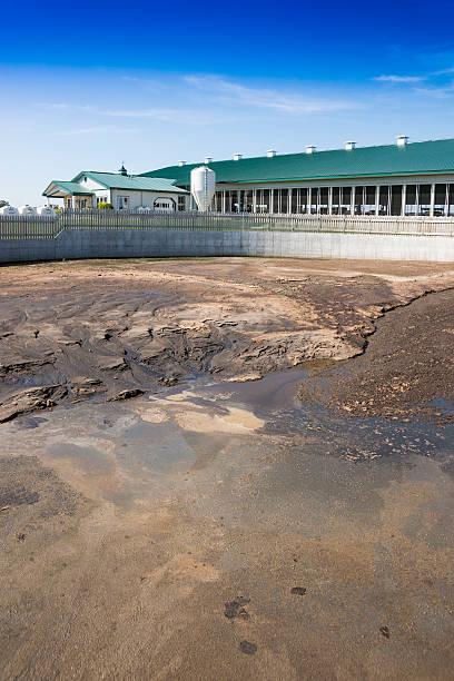 resíduos lagoon em um diário do campo - laguna - fotografias e filmes do acervo
