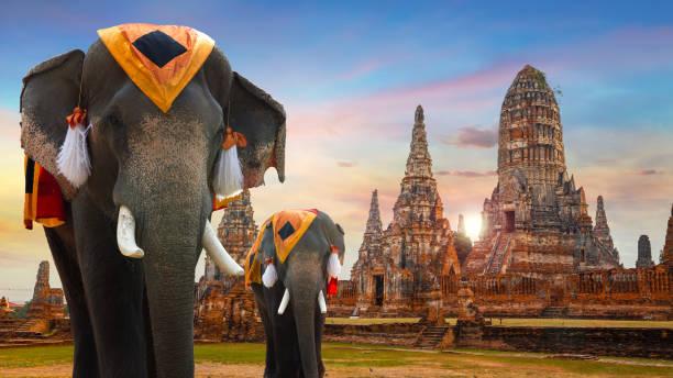 ayuthaya historical park, unesco dünya mirası alanı, tayland tapınakta wat chaiwatthanaram - ayutthaya bölgesi stok fotoğraflar ve resimler