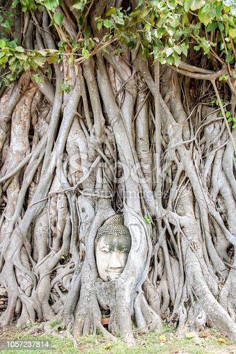 Buddha head entwined within the roots of a tree in Wat Mahathat at Ayutthaya historical park , Thailand