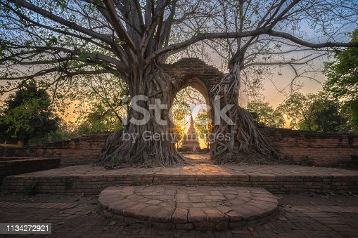 Bodhi tree grows on ruined wall and portico of a deserted temple in Wat Phra Ngam, Ayutthaya, Thailand. Gate of Time. Unseen Thailand.