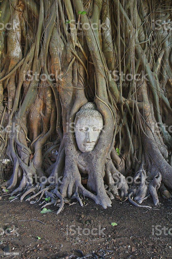 wat phramahathat of Ayuthaya Province Thailand royalty-free stock photo