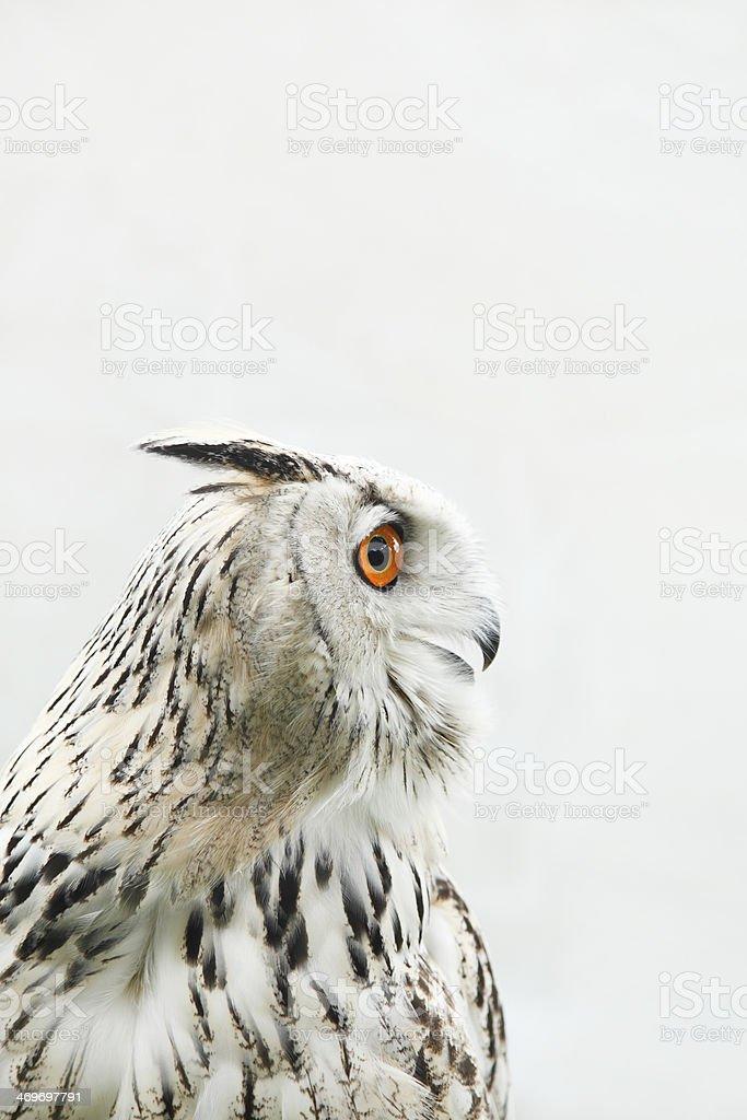 Watchful Bird stock photo
