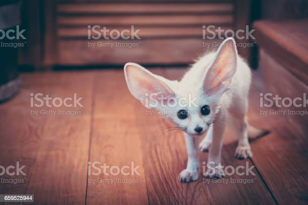 Watchful cute home pet puppy fox stared scared standing on wooden in picture id659525944?b=1&k=6&m=659525944&s=612x612&h=ruptzvlaio1wlptd7qtx br21hcdulorjbxqoh6yy04=