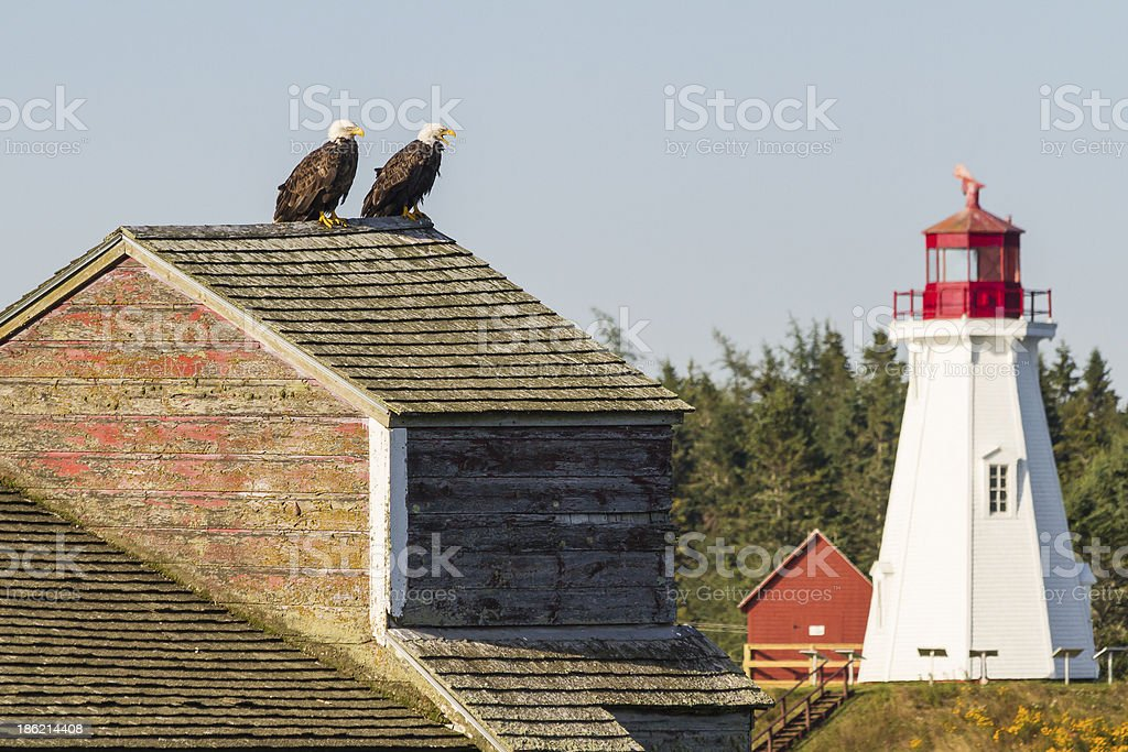 Watchful Eagles stock photo