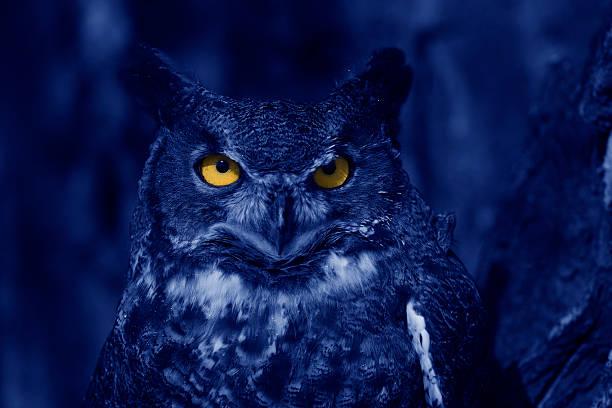 Watchful owl at night picture id144289282?b=1&k=6&m=144289282&s=612x612&w=0&h=oyvppvlfuil4kdxlqcetthyip9eel8lqtscycuieuve=