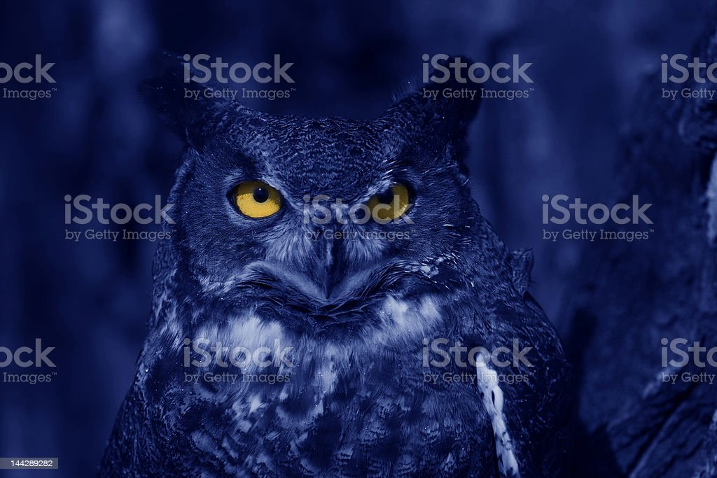 Watchful owl at night stock photo