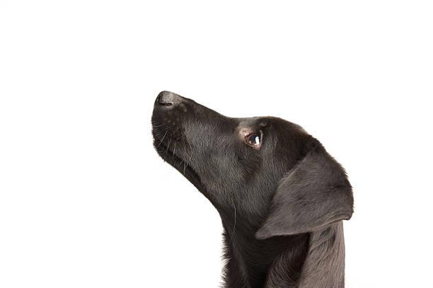 Watchful young dog picture id94465340?b=1&k=6&m=94465340&s=612x612&w=0&h=n3gtq0dwrblboa2s3xj22w0acdfwjqpuk 3vtf29cce=