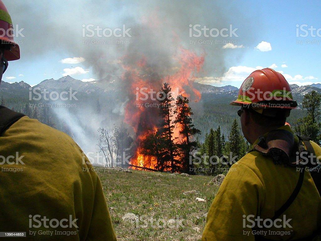 Watching a tree burn in Wyoming stock photo