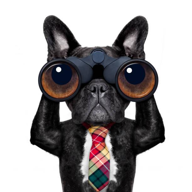je regarde le chien avec des jumelles - indiscret photos et images de collection