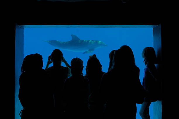 Watching Dolphins stock photo