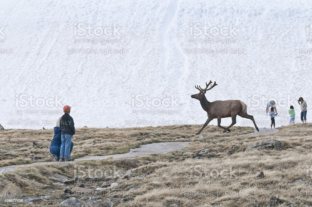 Watching Elk on Trail Ridge Road, Rocky Mountain National Park stock photo