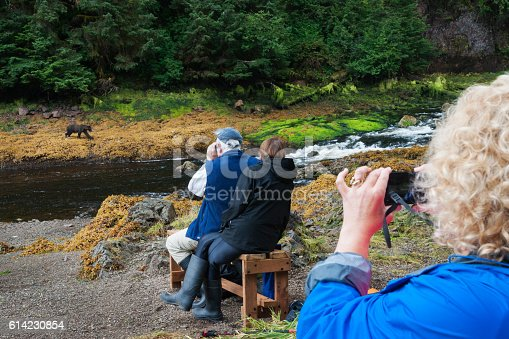 istock Watching grizzly bears in the wild 614230854