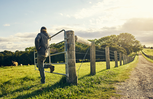 Rearview shot of a farmer watching over cattle on a farm
