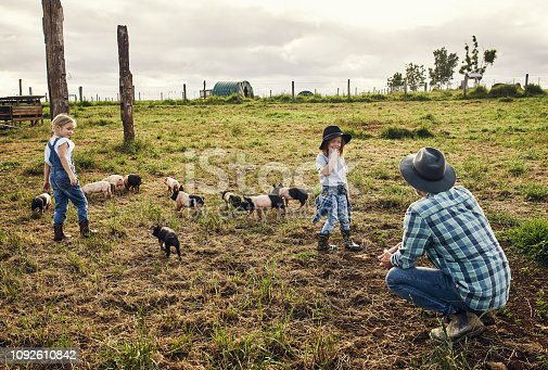 Shot of a father and his two little kids working on their pig farm