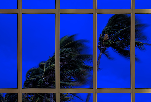 watching windy tropical storm behind the window