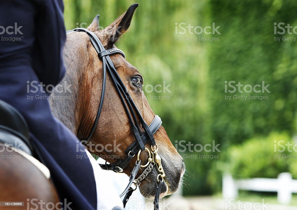 Watching you royalty-free stock photo