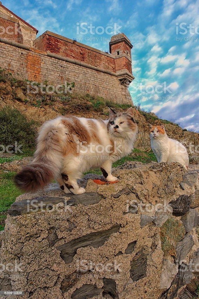 Tourelle de guet et chats stock photo