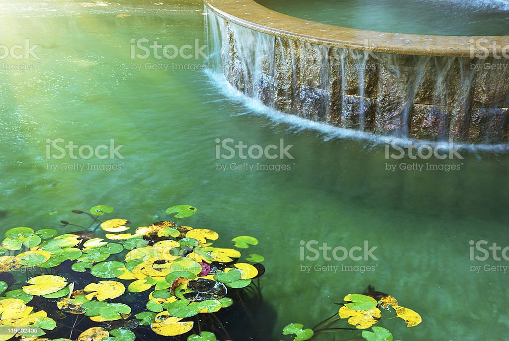 Water and leafs royalty-free stock photo