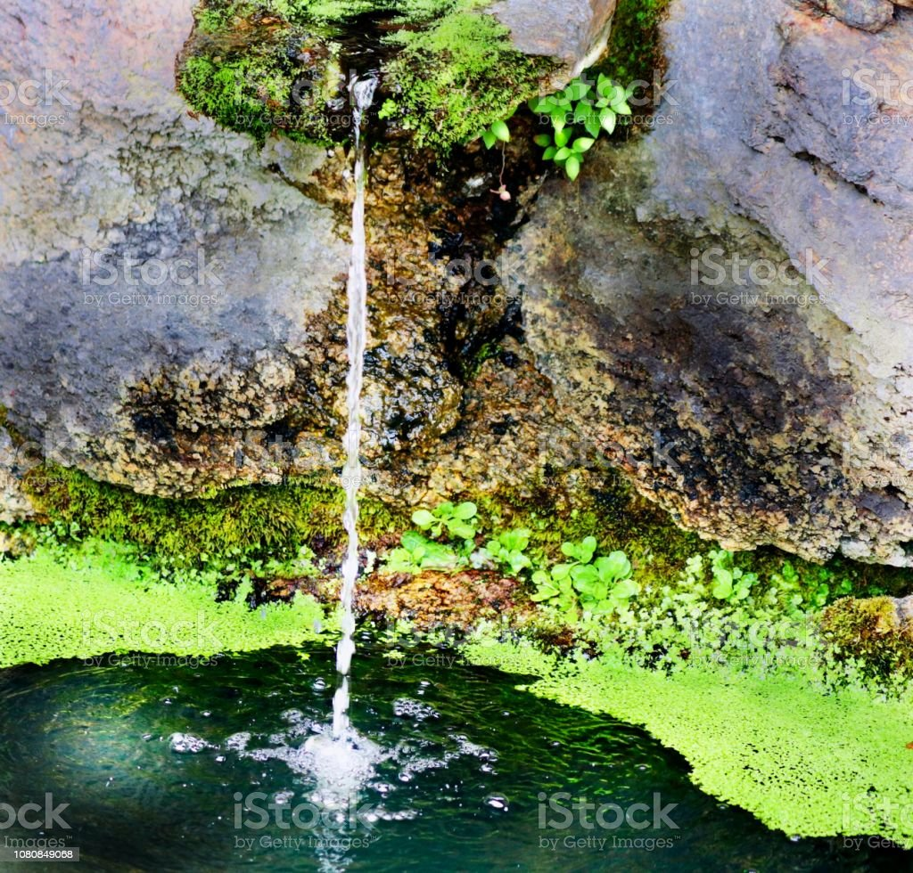 Water and moss stock photo