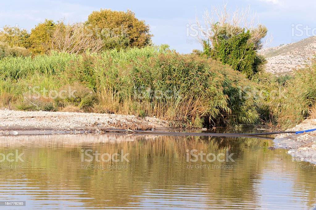 Water and plants royalty-free stock photo