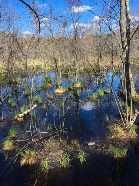 IMG_7459 Water and trees in wooded area in spring stock photo