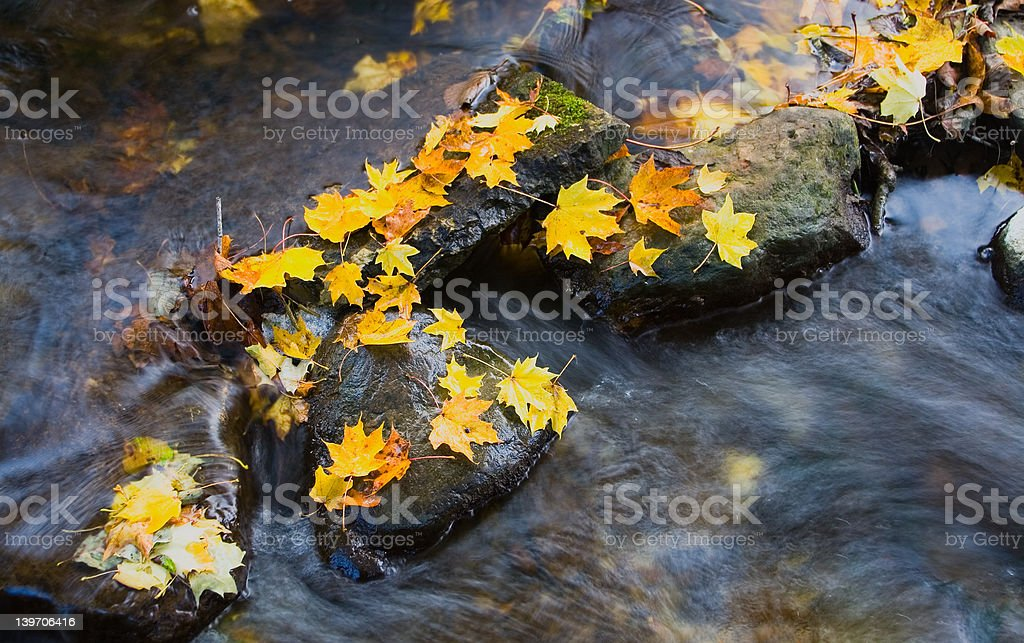 Water and yellow leafs royalty-free stock photo