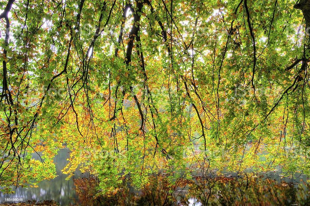 Water autumn reflection royalty-free stock photo