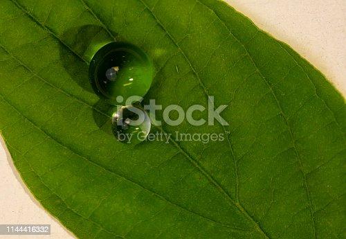 istock Water Balls on Green Leaf 1144416332
