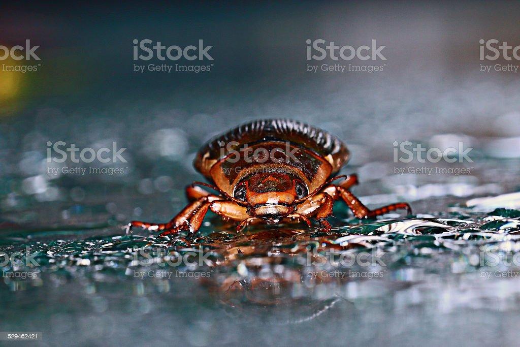 water beetle macro stock photo