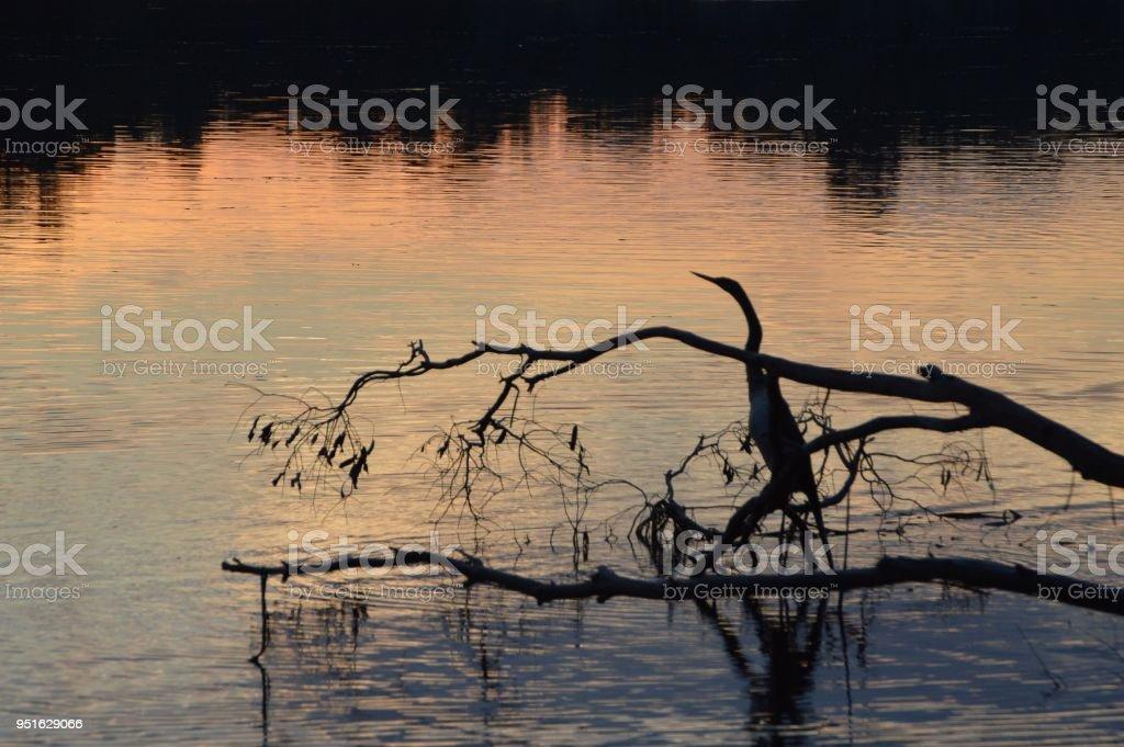 Water bif at a lake stock photo