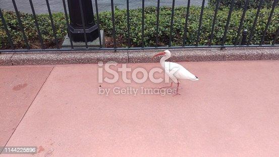 Heron walking on paved grounds