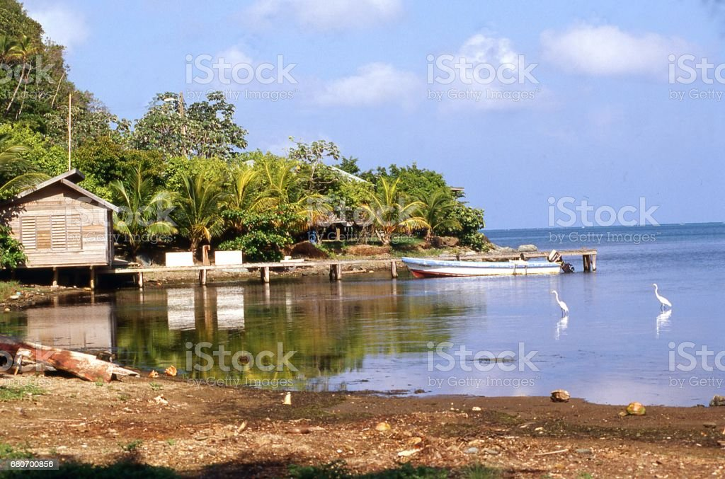 Water birds along shallow coastal lagoon on north shore of Roatan Bay Islands Honduras stock photo