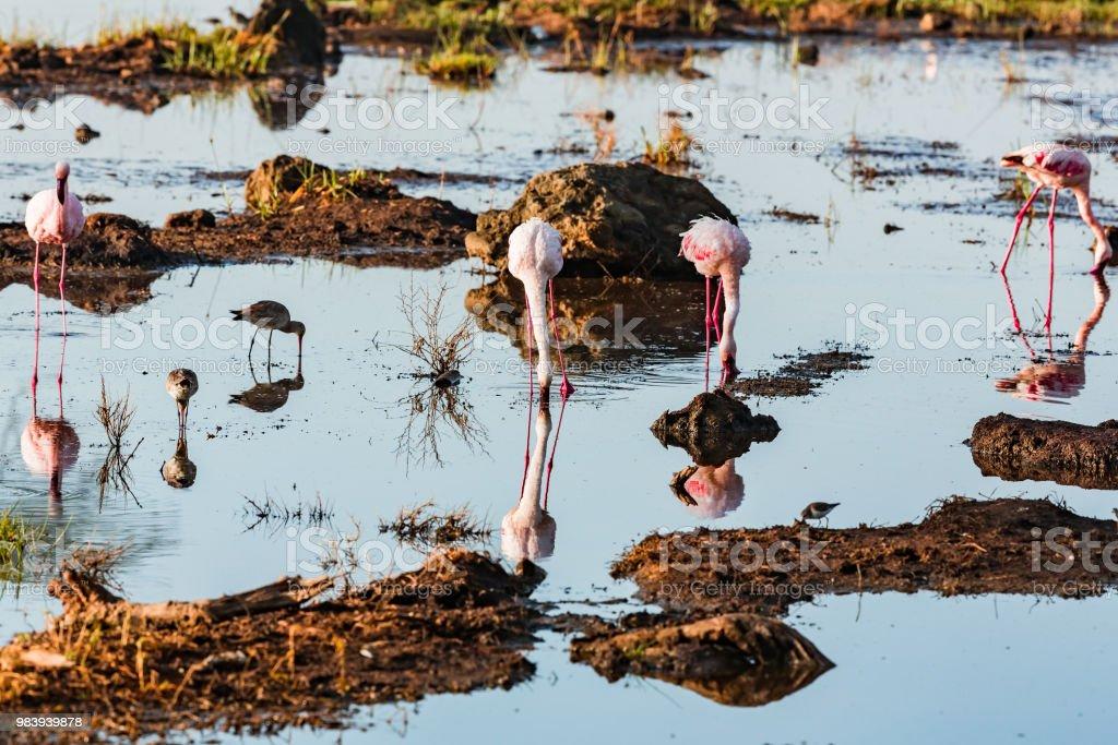su kuşları, flamingolar ve diğerleri Nakuru Gölü stok fotoğrafı