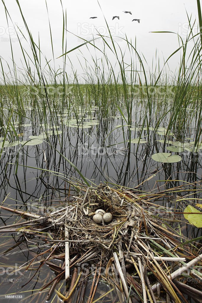 Water Bird's Nest, Lake Isikli, Civril, Denizli, Turkey stock photo