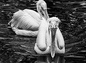 Water birds in Zoo