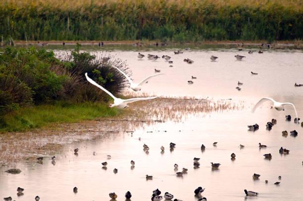 Wasser Vögel – Foto