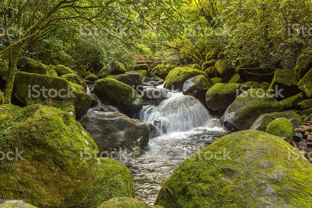 Water cascade in a rain forest stock photo