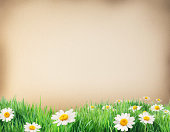 istock Water colour paper bodered with grass and flowers. 186033077