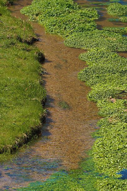 Agrião-da-terra com água do rio - foto de acervo