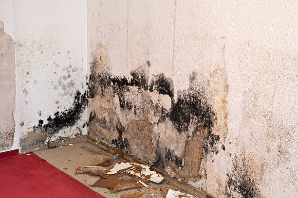 water damage moldy mildew schimmel - schimmel stockfoto's en -beelden